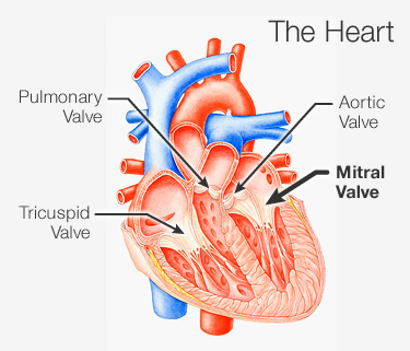 The Spiritual Reason Behind Mitral Valve Prolapse